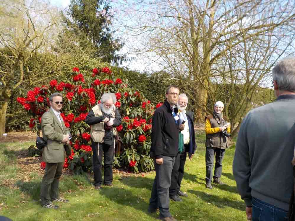 Koen Camelbeke and <i>Rhododendron</i> 'Taurus'