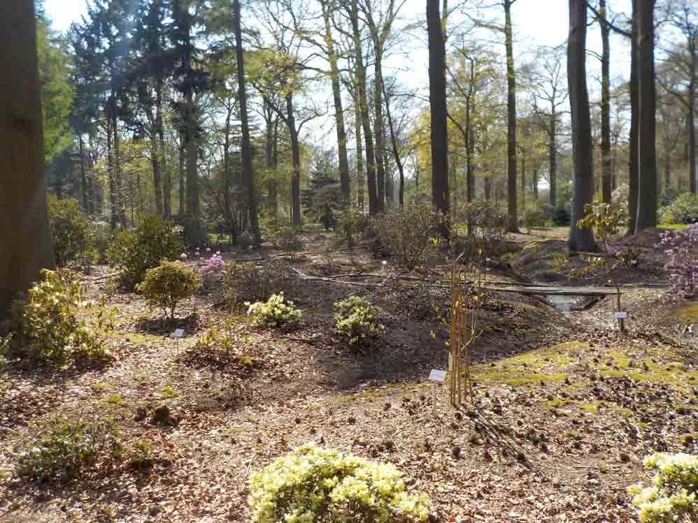 <i>Rhododendron</i> species and cultivars displayed in the Verlat Wood