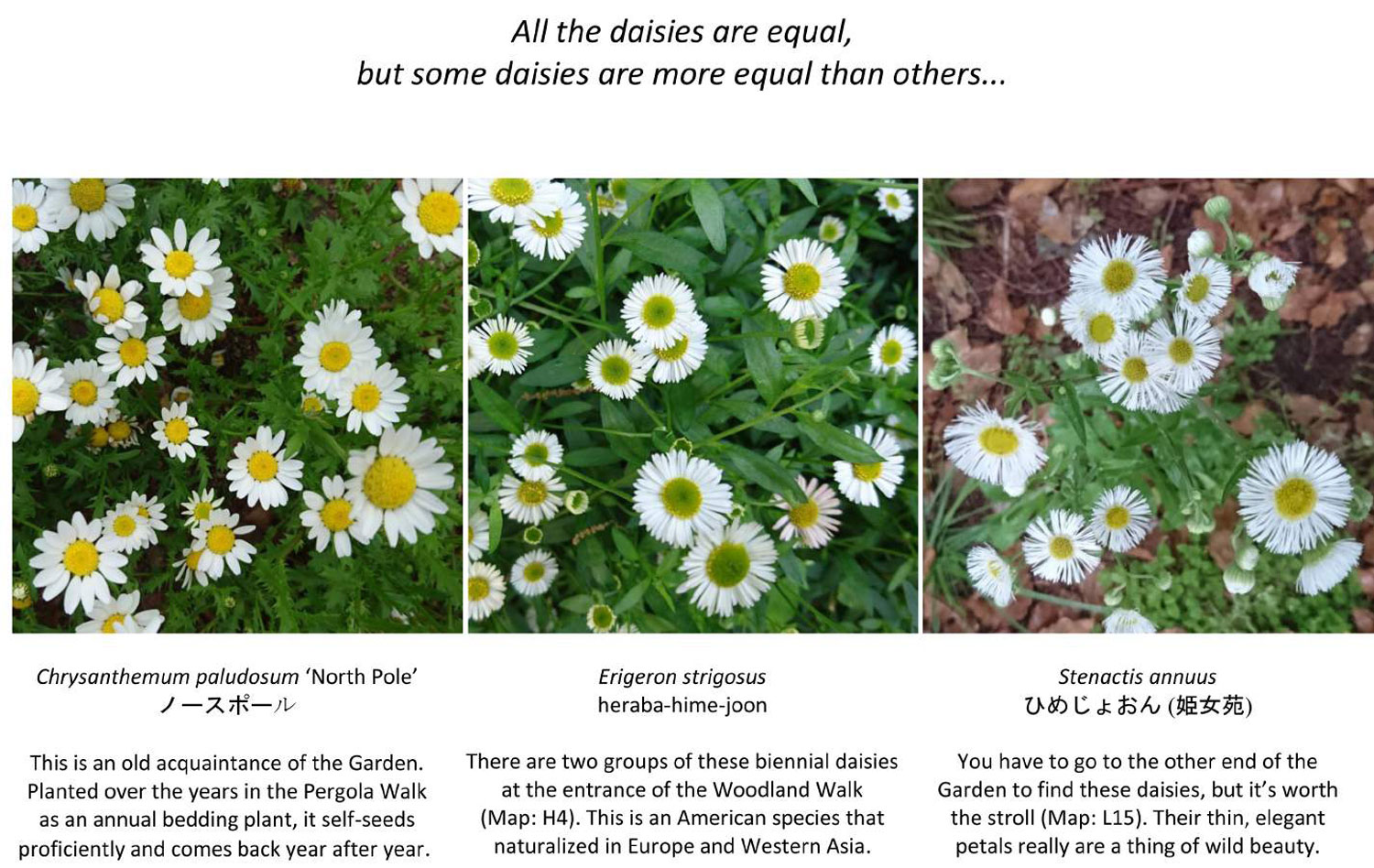 all-daisies-are-equal