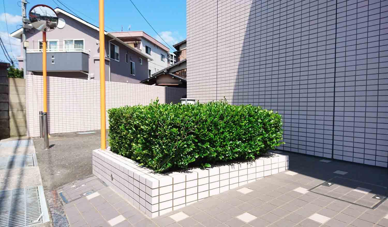 Due leitmotiv del paesaggio urbano giapponese: <i>Eurya emarginata</i> e piastrelle sanitarie.