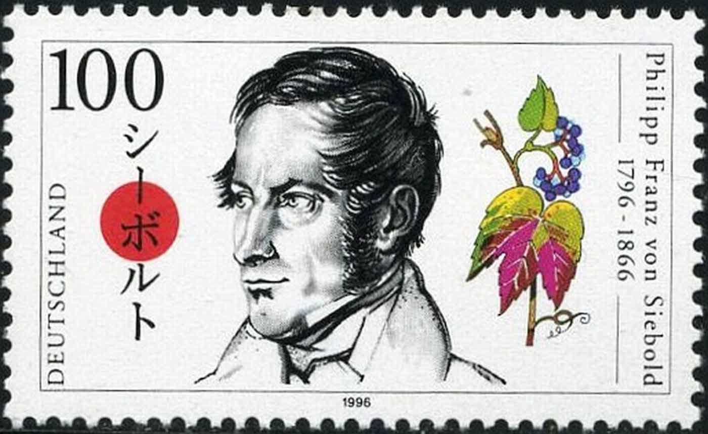 Francobollo tedesco raffigurante Siebold e una delle sue introduzioni <i>Parthenocissus tricuspidata</i>.