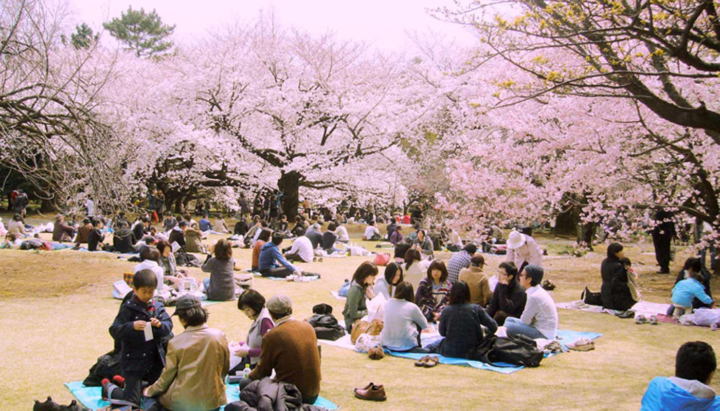 Una classica scena di <i>hanami</i> collettivo nei parchi di Tokyo (internet database).