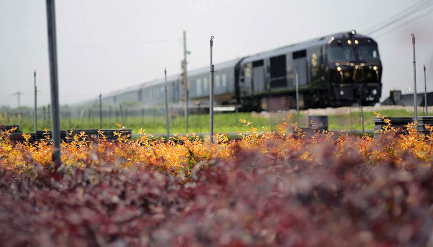A train crossing the planted fields of Kurume.