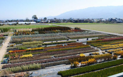 An insight into the world of Japanese nurseries