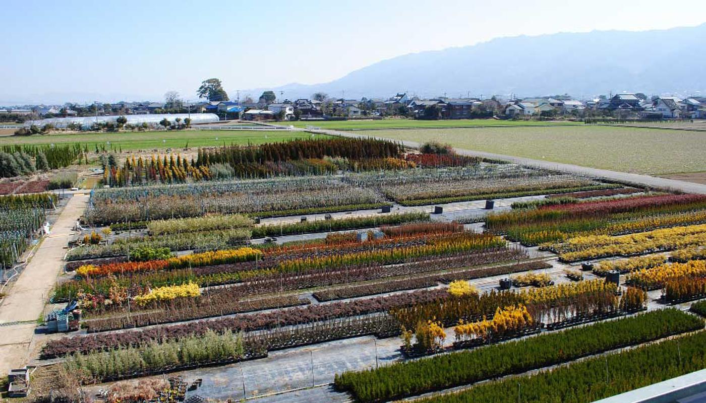 Another view of Tomonori's nursery.