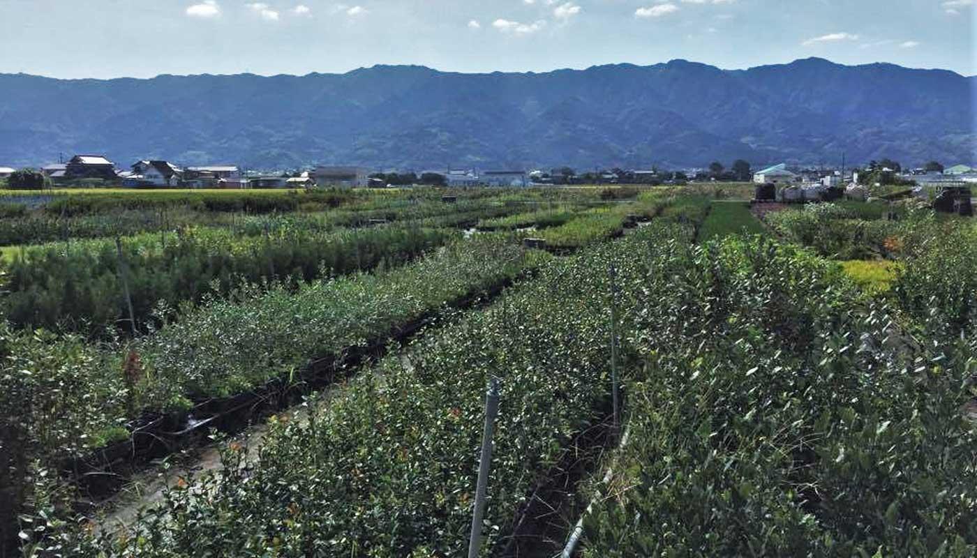 The beautiful landscape around Kurume, just like a Pistoia of Japan.