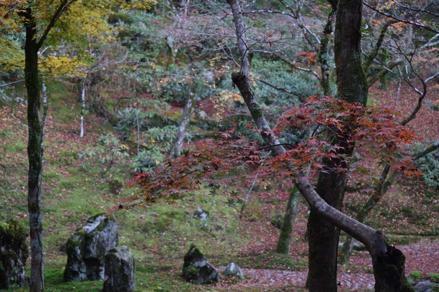 I giardini interni del tempio Kōmyōzen-ji a Dazaifu, Fukuoka.
