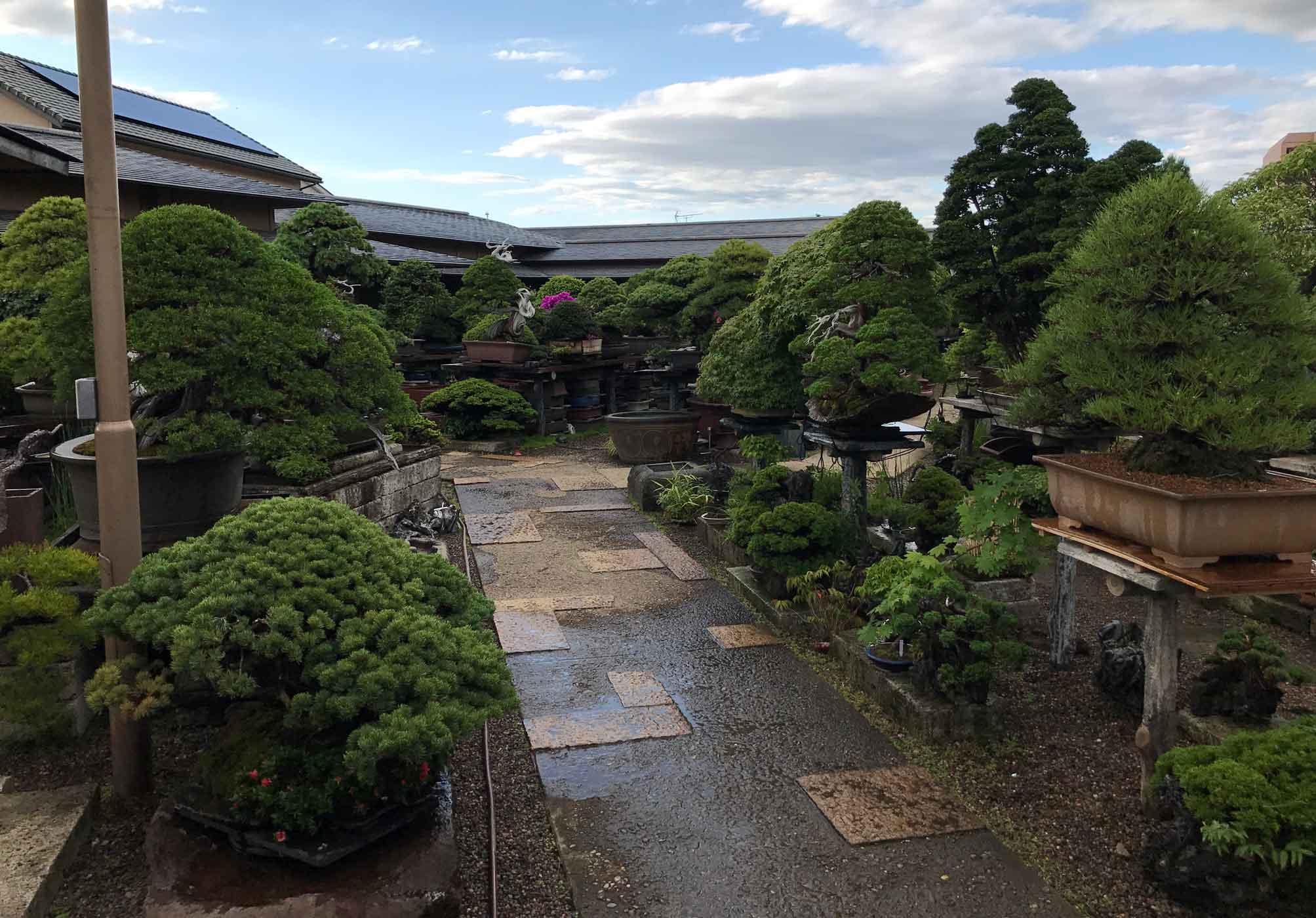 Mansei-en bonsai nursery at Omiya, near Tokyo.