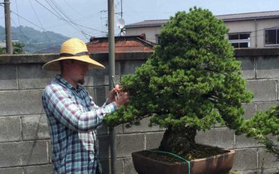 Adam M. Jones, an American bonsai apprentice in Japan