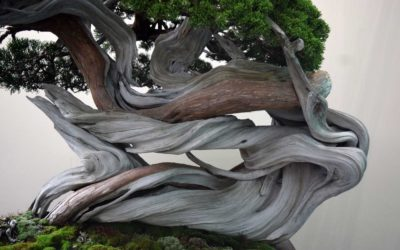 The World Bonsai Convention, le olimpiadi del bonsai