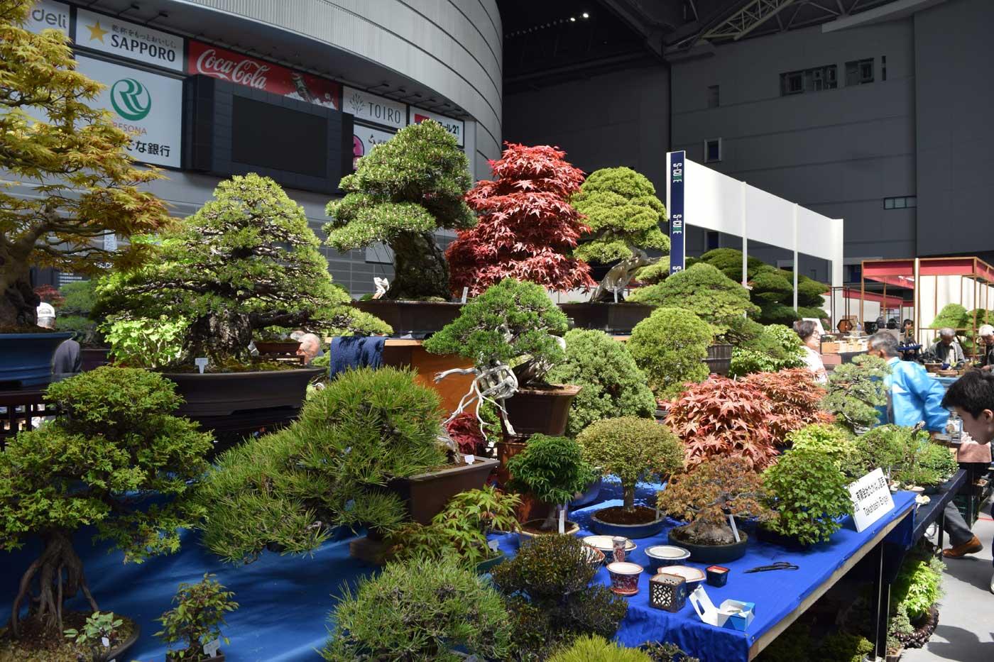 Piccoli e medio-grandi bonsai in vendita nell'arena.