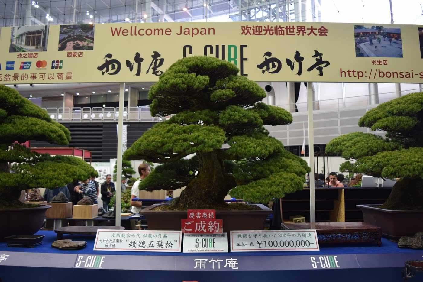 Un bonsai (Pinus thunbergii) battuto per cento milioni di yen. Per quanto mi riguarda, un record...