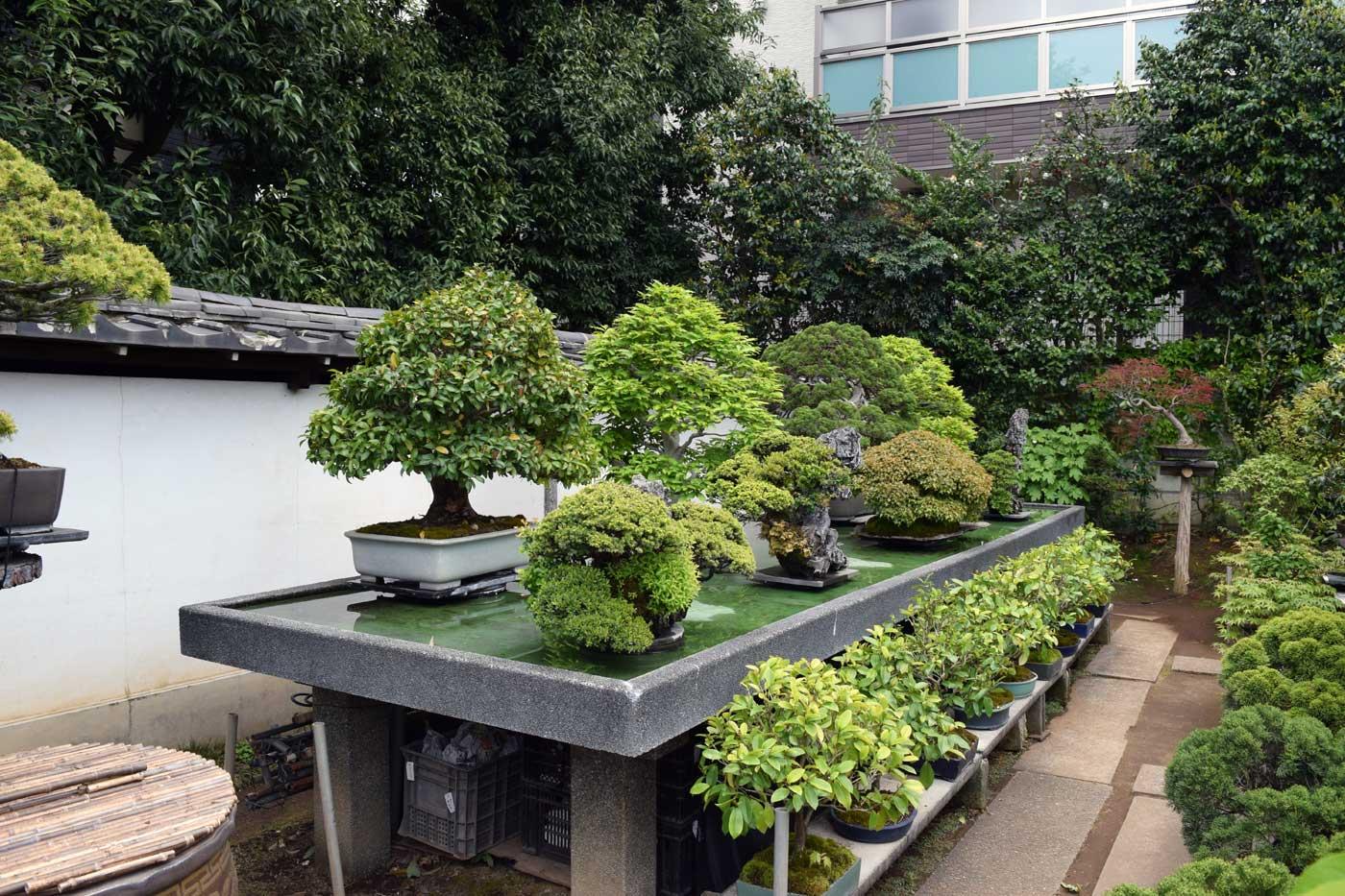Fuyo-en, esposizione dei bonsai più prestigiosi su uno specchio d'acqua.
