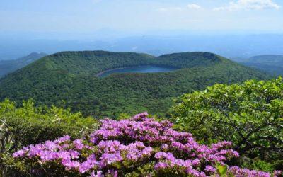 Hunting Japanese azaleas