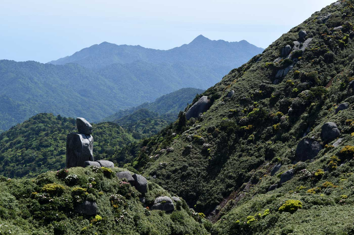 The peaks of Mianoura-dake. A real rhododendron garden.