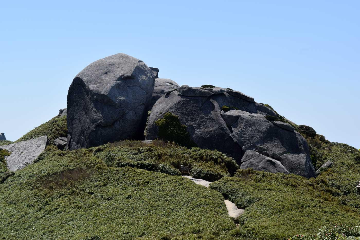 Rock formation and <i>Pseudosasa owatarii</i>.