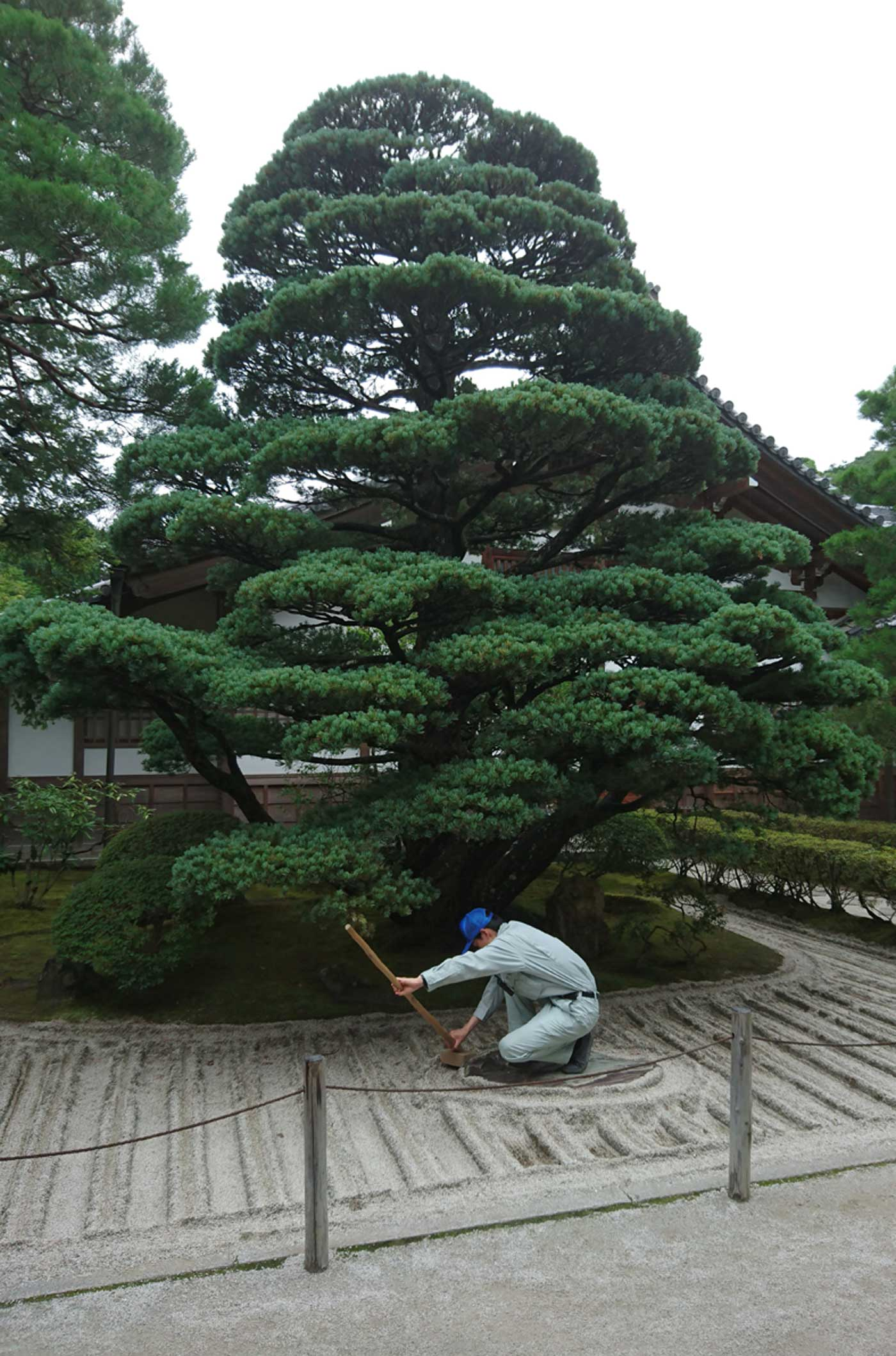 Maintaining the dry garden around <i>Pinus parviflora</i> at Ginkaku-ji, Kyoto.
