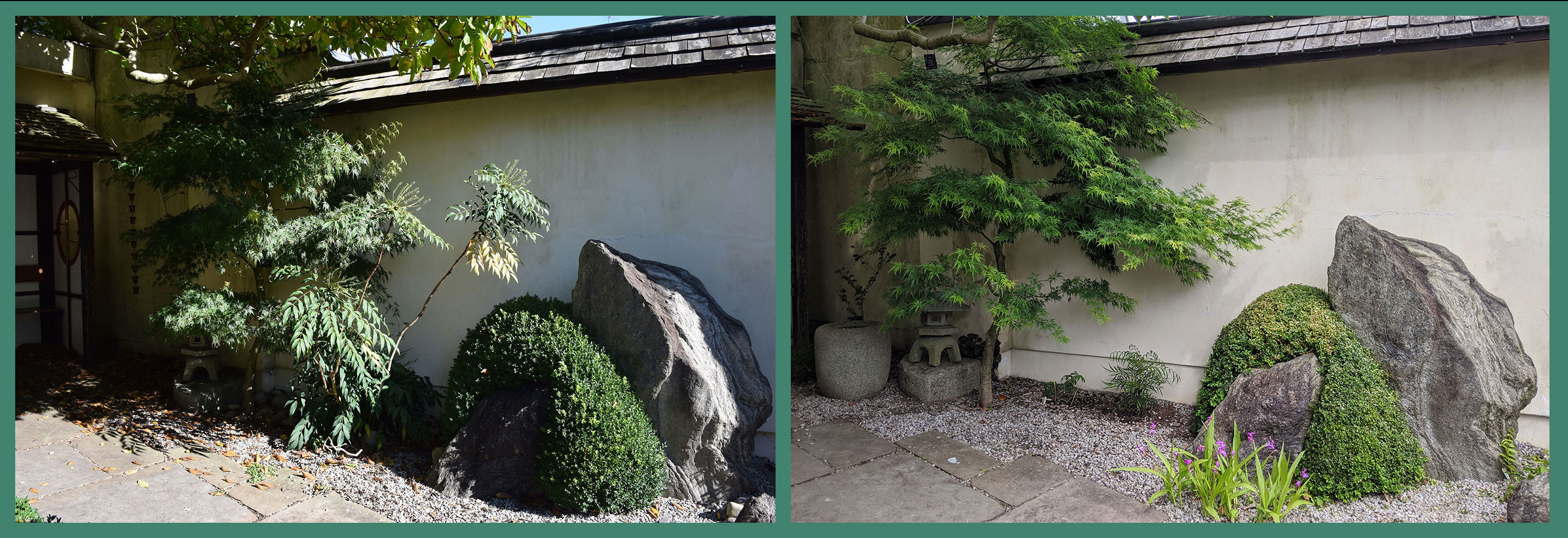 View of part of a boundary wall with stone work, <i>Berberis</i> sp., and <i>Acer palmatum</i>.