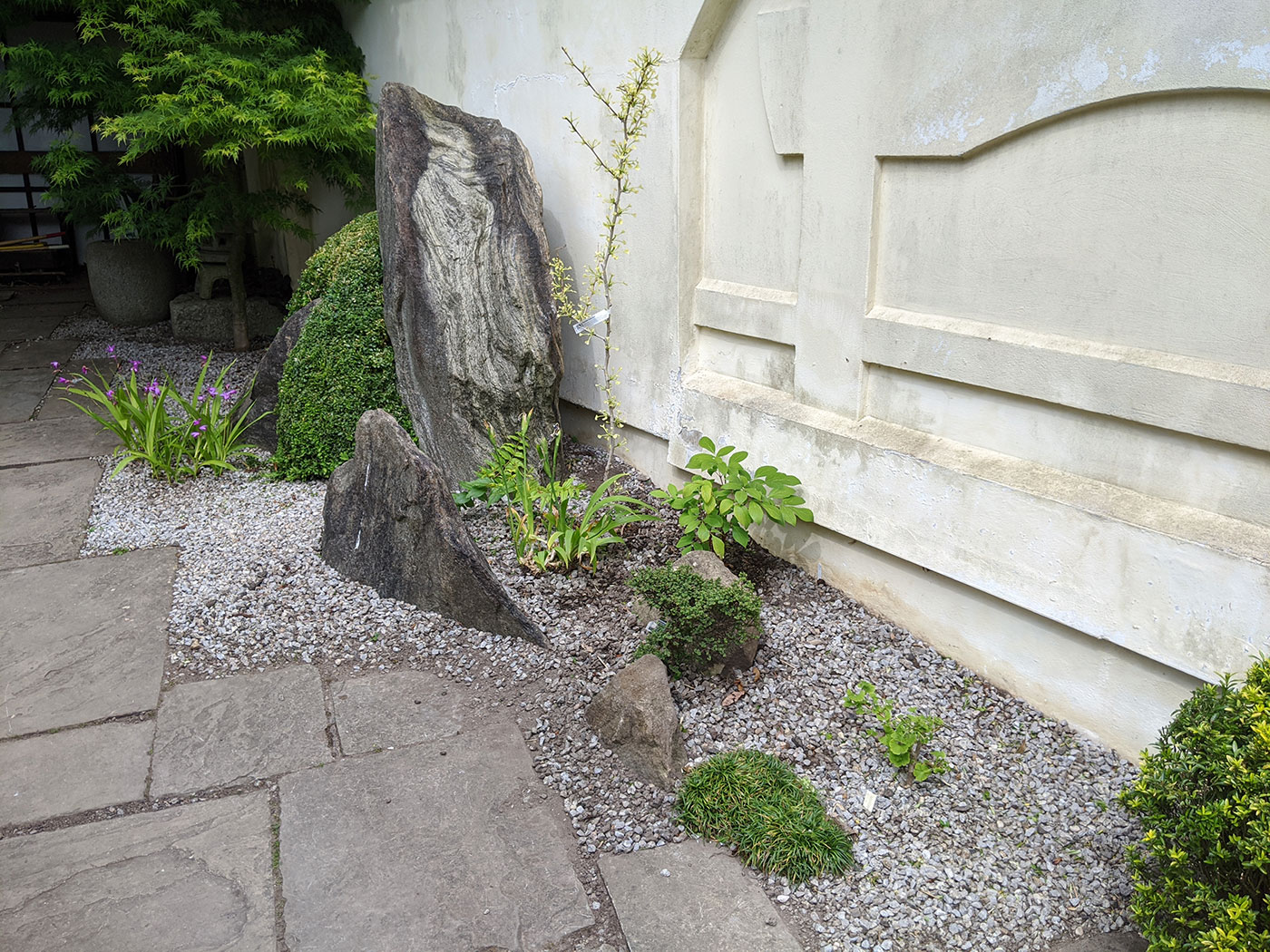 A new gravel bed with some specimen dwarf shrubs and perennials
