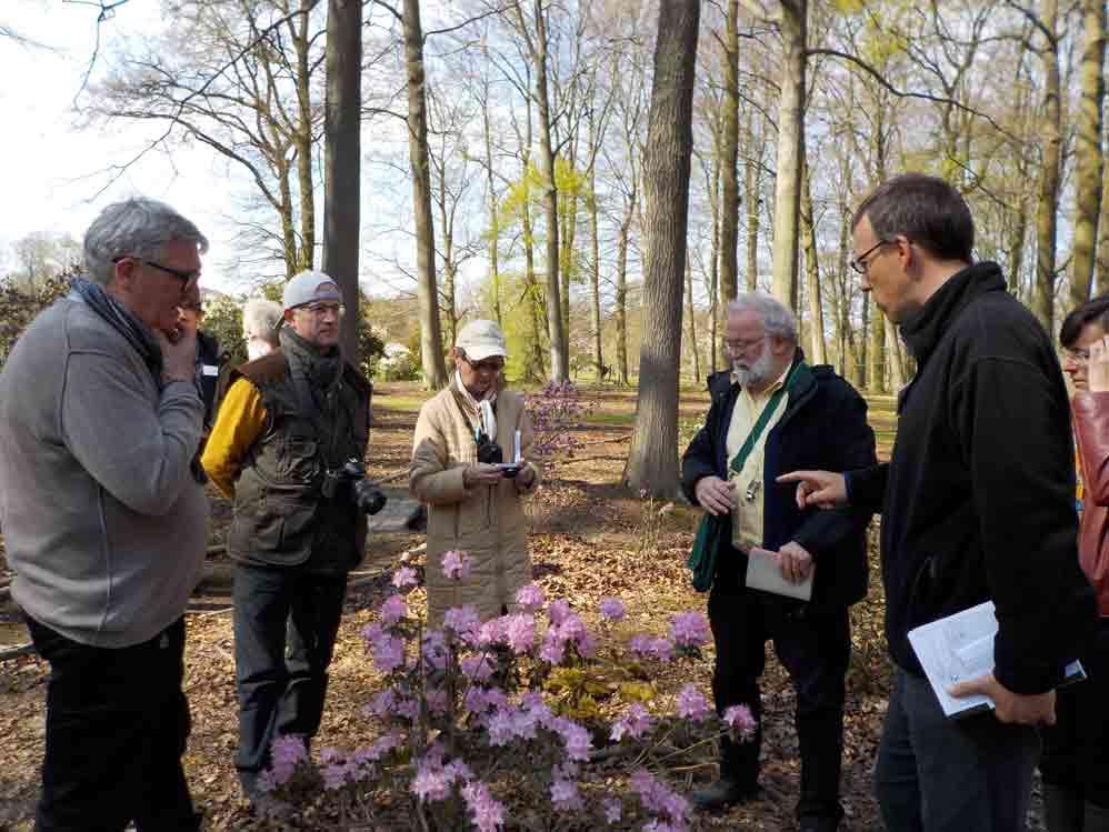 Examining <i>Rhododendron</i> species