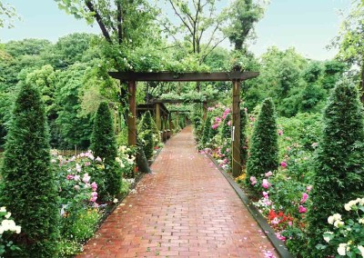 Curating an English Garden in southern Japan