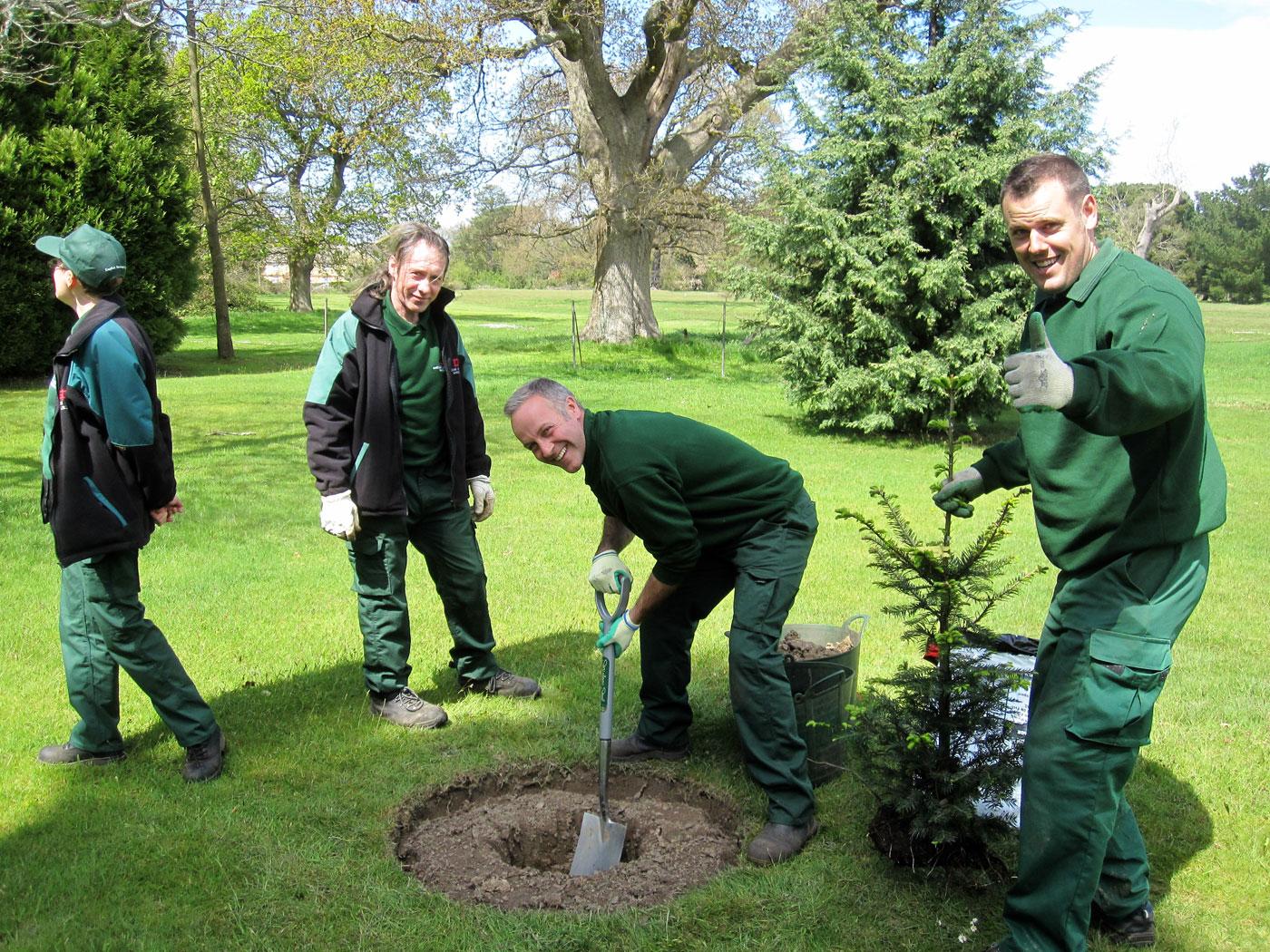 Planting <i>Abies grandis</i> in the Memorial Arboretum at Osborne House
