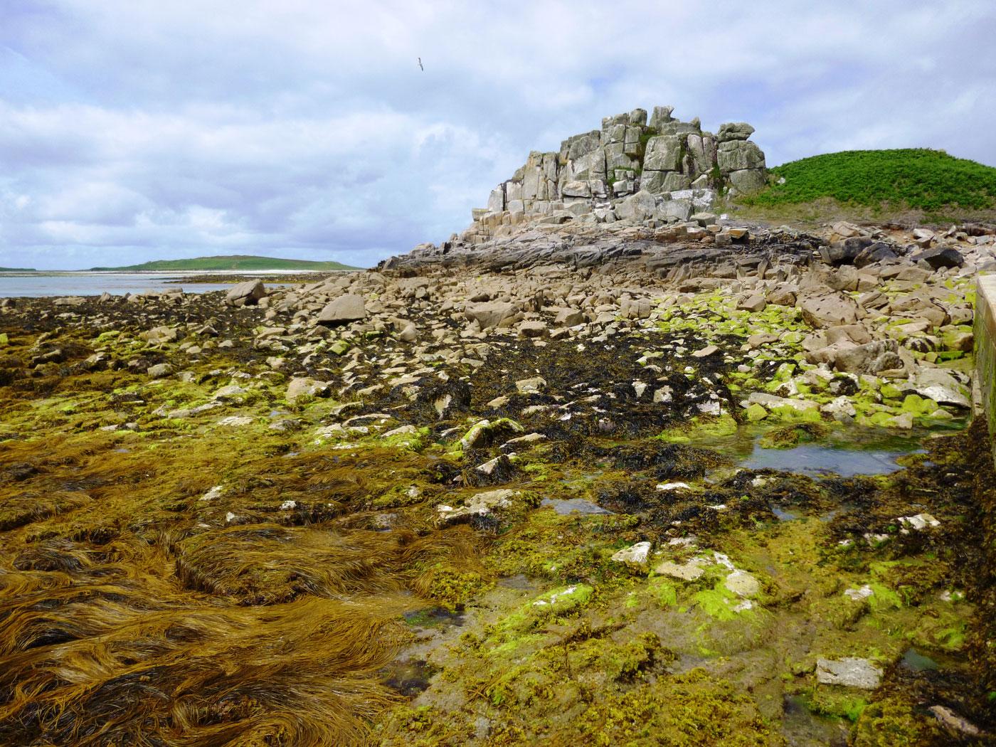 Rugged landscape on Tresco Isle (mid July)
