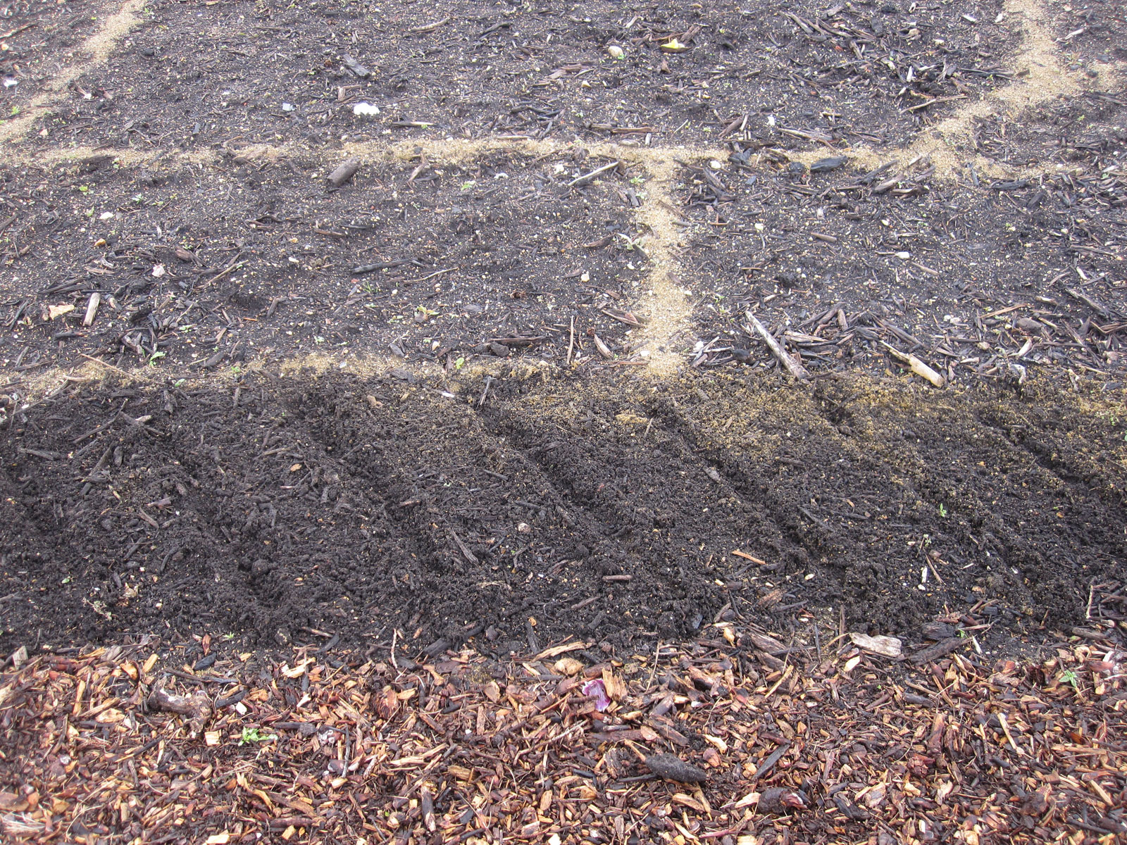 Directly sowing hardy annuals