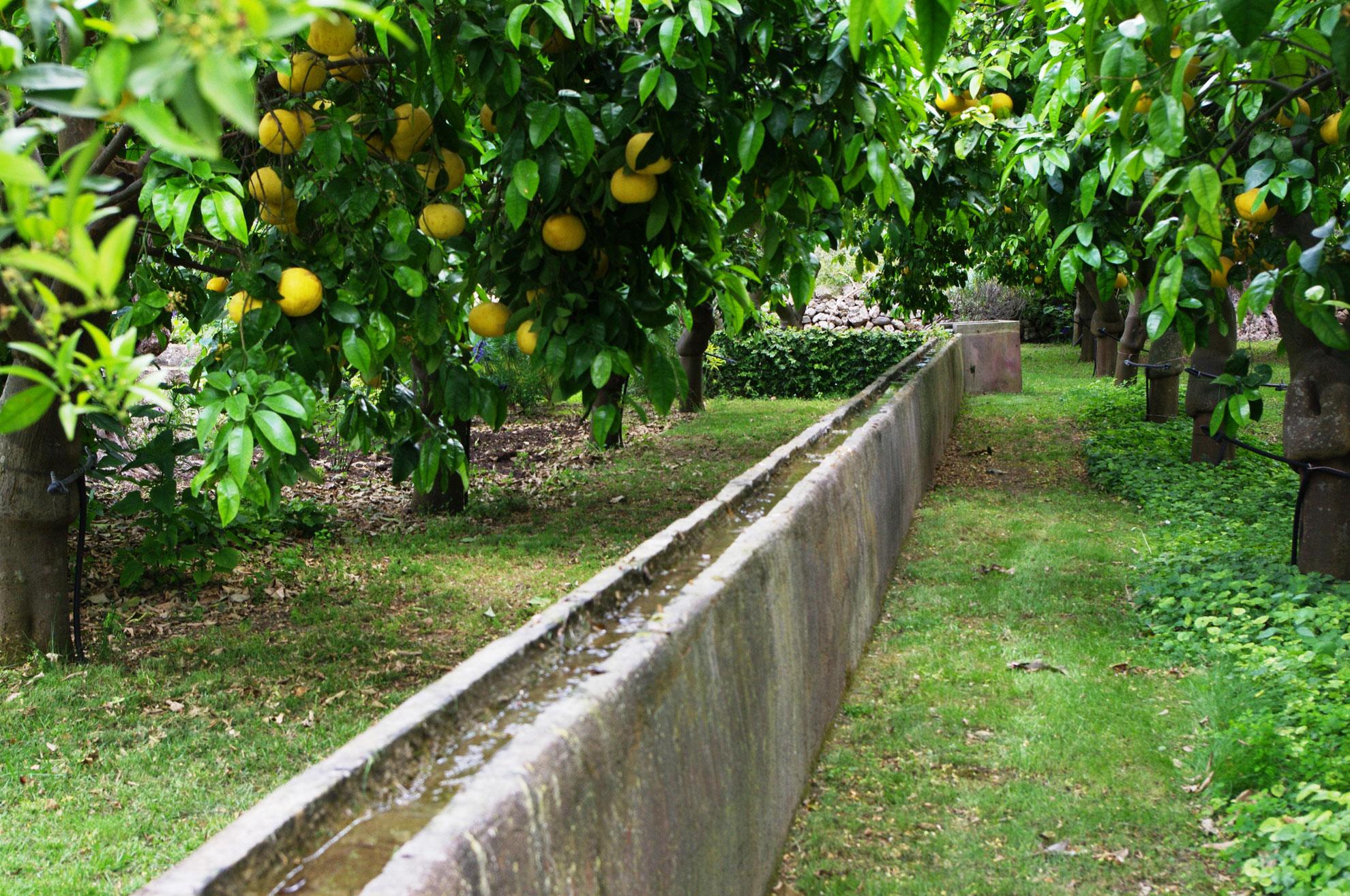 Citrus garden at Villasmundo, Sicily