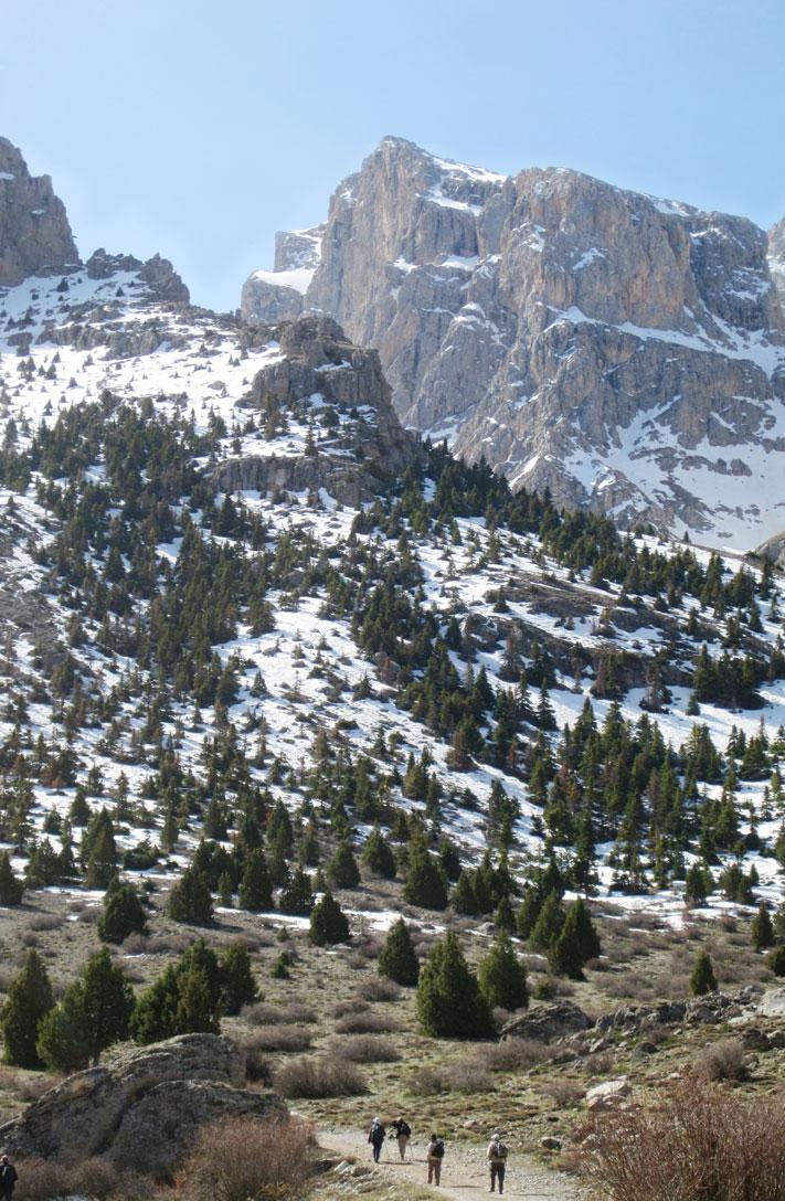 Planthunting on the Taurus Mountains (Turkey)